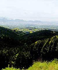 日金山・十国峠ハイキングコース
