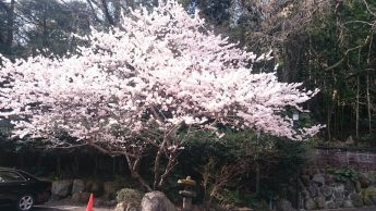 足柄桜 ㏌白雲荘のイメージ