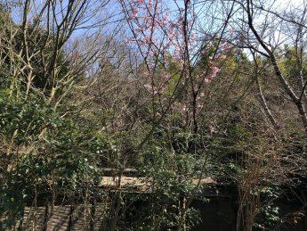 桜(^^♪のイメージ